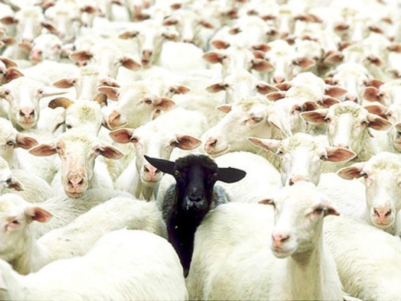Ovelha Negra Compromete Imagem do Supremo