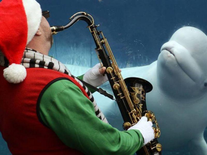 Imaginando a Diferença: Natal do Homem e do Animal