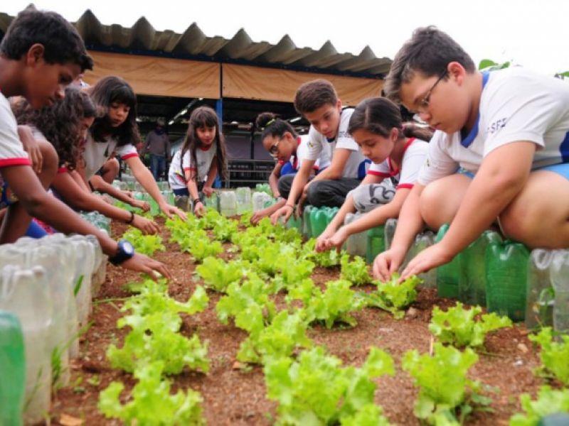 Instituições públicas do ensino básico terão que implantar hortas escolares
