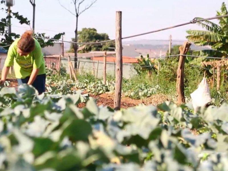 Projeto de lei institui a Política Nacional de Agricultura Urbana