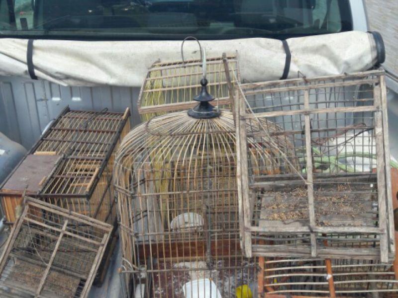 Mais de 70 animais são apreendidos em Penedo no primeiro dia de FPI