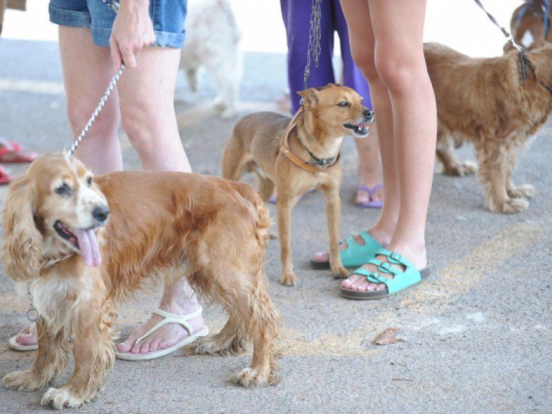 Comissão de Meio Ambiente aprova a criação do Cadastro Nacional de Animais Domésticos