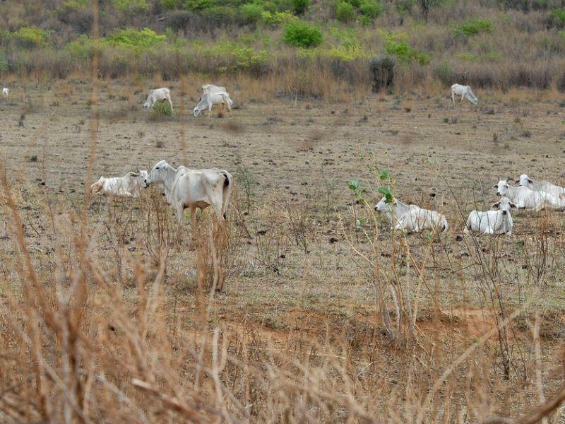Senado aprova projeto de lei que cria fundo para combater a seca no Nordeste