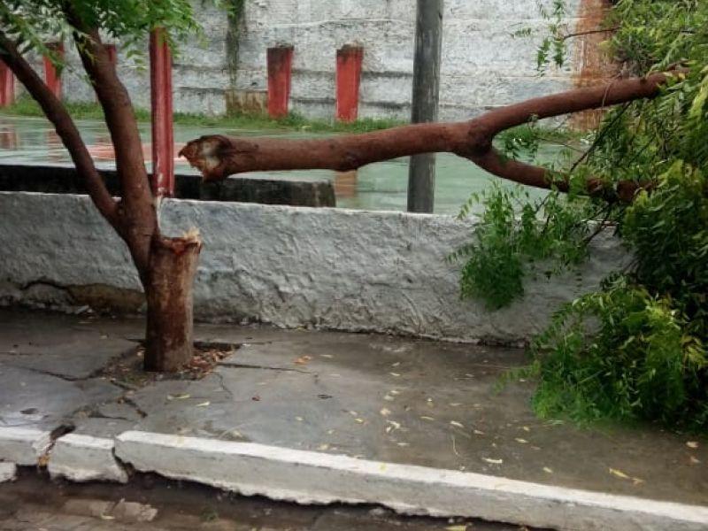 Chuvas e fortes ventos derrubam árvores no principal ponto turístico de Penedo
