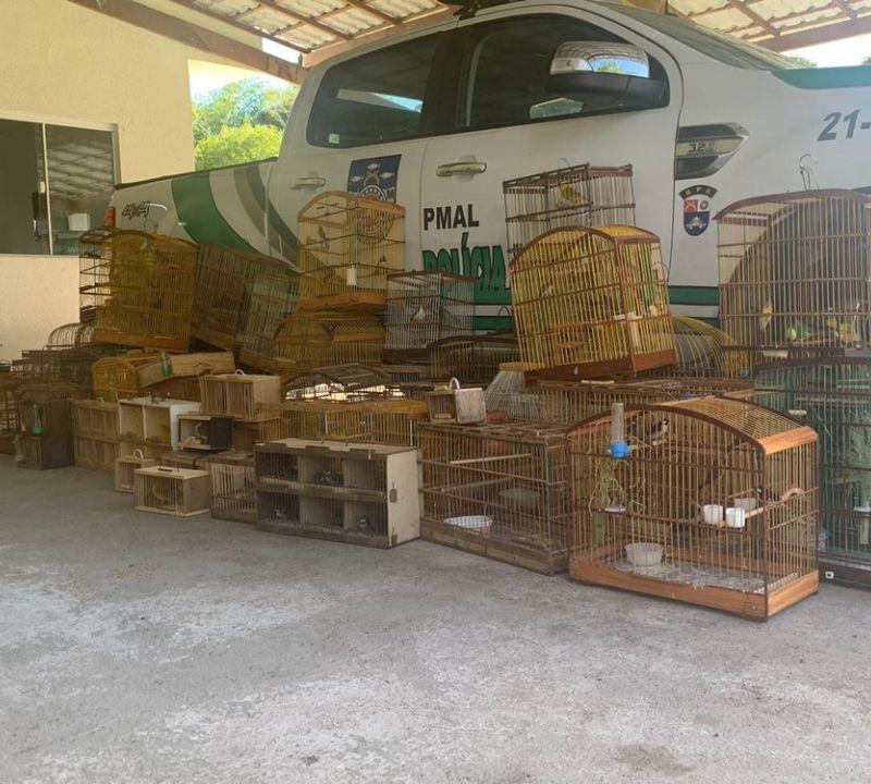 Batalhão Ambiental resgata 208 pássaros silvestres em Maceió e no interior de AL