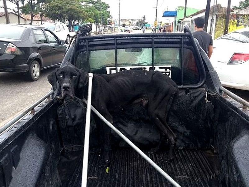 Deixado para morrer: Bombeiros resgatam cão trancado há meses em residência de Penedo