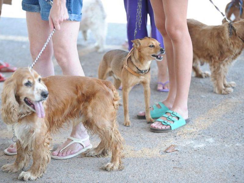 Deputados começam a analisar projeto que regulamenta planos de assistência à saúde do animal