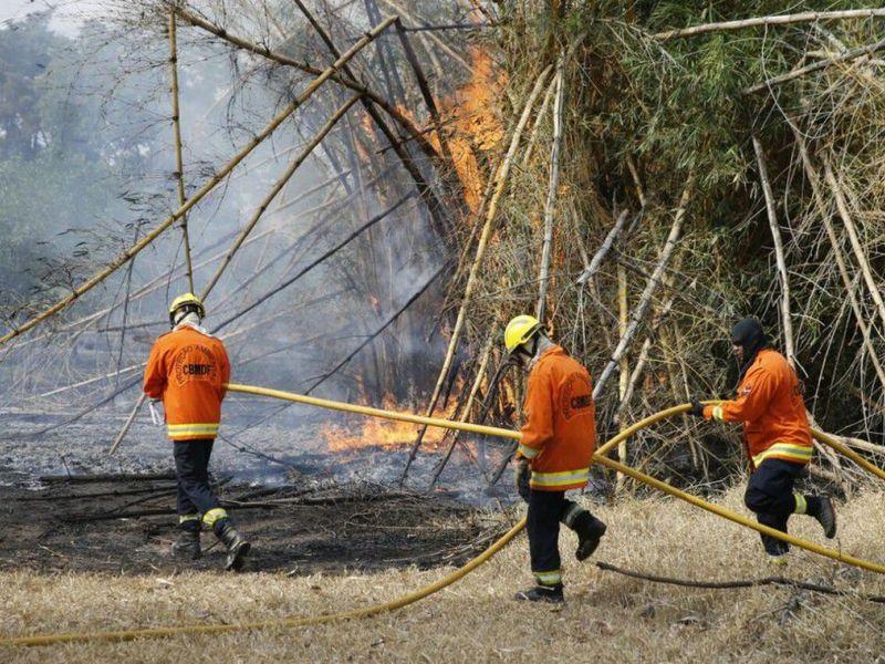 Incêndio atinge parque ecológico em área urbana do Distrito Federal