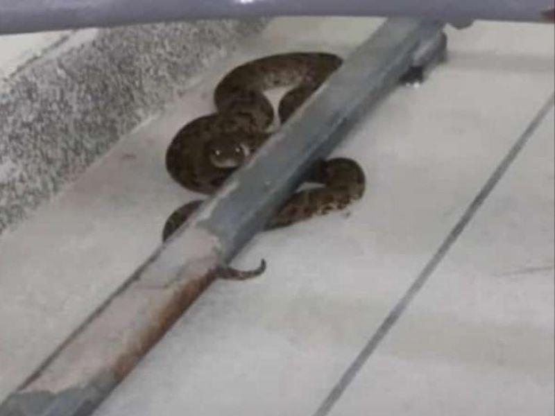 Estudantes ficam assustados após visita de cobra em sala de aula do Ifal Penedo