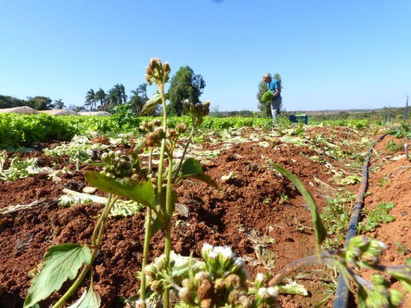 Garantia-Safra atende pequenos agricultores familiares que sofreram com seca ou estiagem