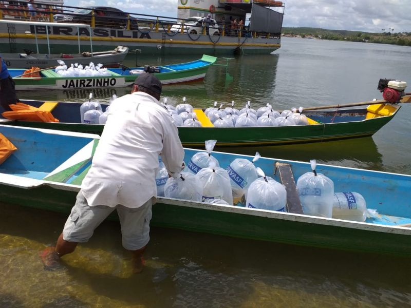 Peixamento da Codevasf repovoa rio São Francisco durante Festa de Bom Jesus de Penedo