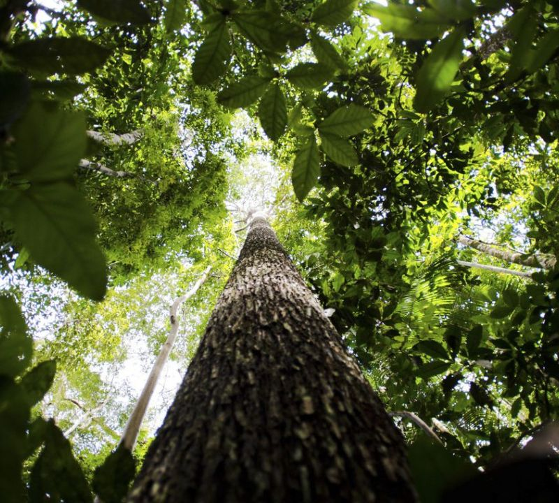 Pesquisa na Amazônia analisa importância da biodiversidade