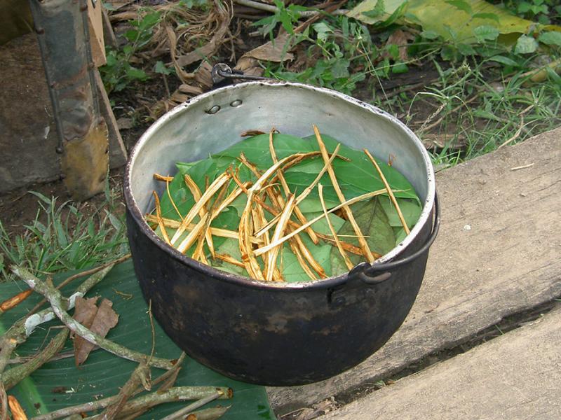 Projeto regula uso da ayahuasca e dá status de religião para o Santo Daime