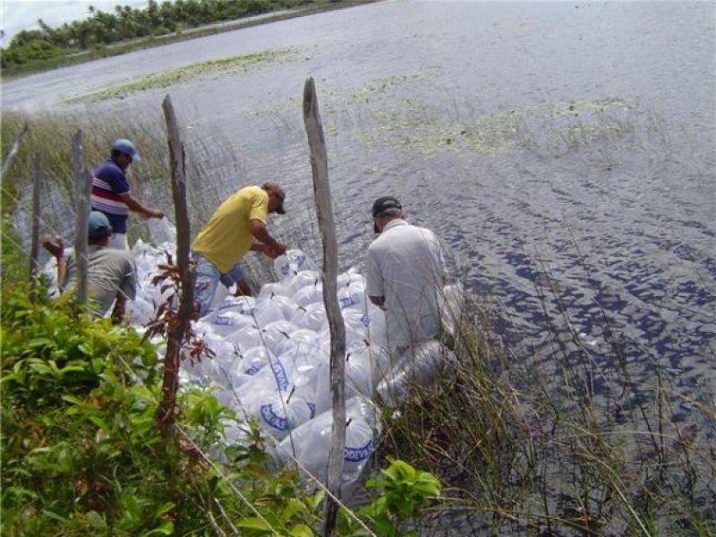 Codevasf promove peixamento em Piaçabuçu